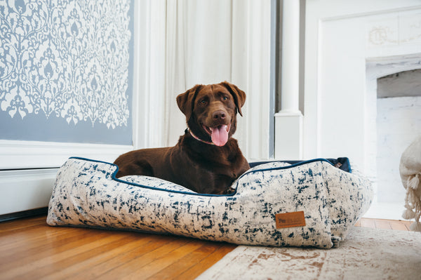 Labrador Retriver lies in P.L.A.Y. Celestial Midnight Blue lounge bed, next to wall and fireplace, on wooden floor in living room; SKU PY3015BLF