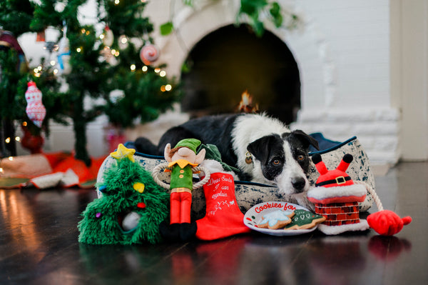Mixed Breed is lieing in lounge sofa bed along with set of plush dog toys, P.L.A.Y. Merry Woofmas (Christmas Eve Cookies, Santa's Little Elf-er, Doglas Fur, Good Dog Stocking and Clumsy Claus), with Gift Box. SKU: PY7110AUF. There is a Christmas tree and fireplace in background
