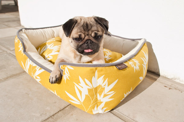 Pug is resting in P.L.A.Y. Bamboo mustard pebble gray lounge bed next to house wall