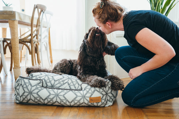 Water dog is sniffing owner lady on P.L.A.Y. Solstice Snowy lounge bed for medium size dogs. SKU: PY3014BMF. They are in dinning room, next to stylish wooden table and chair