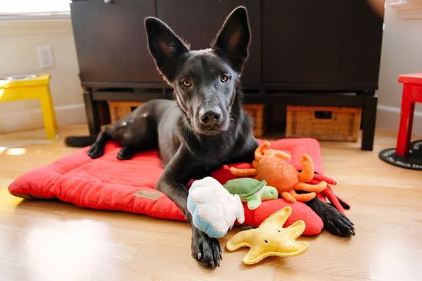 Black Shepherd surrounded with P.L.A.Y. full set collection, Under the Sea dog plus toys, SKU: PY7016BSF