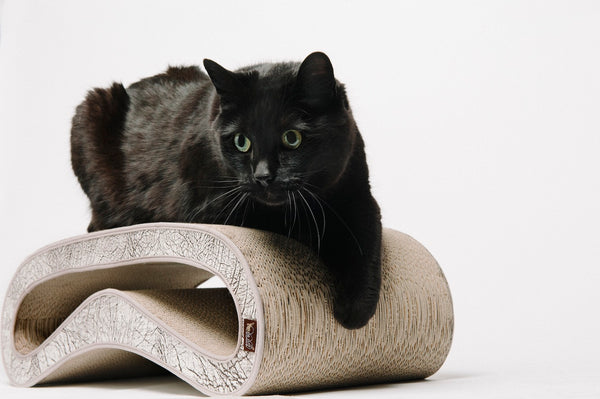 lack shorthair cat is lounging on P.L.A.Y. Scratcher The Leeloo Grey, SKU: PY7300AUF