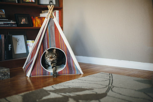 Mixed breed cat sneaks from P.L.A.Y. Pet Teepee Tent Horizon, Desert, SKU: PY6011AUF, in middle of room, in front of book shelf