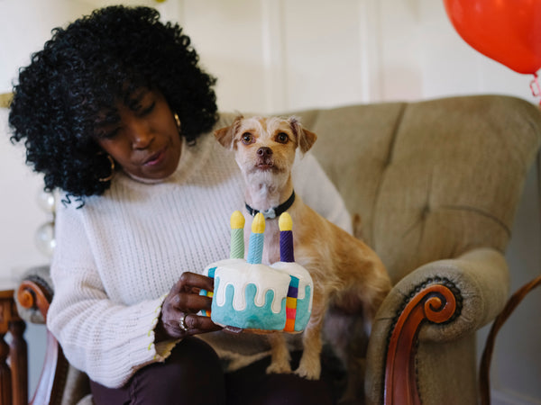 P.L.A.Y. Toy for dogs, Party time Cake, SKU: PY7101BSF with a small dog having a bonne appetit birthday cake