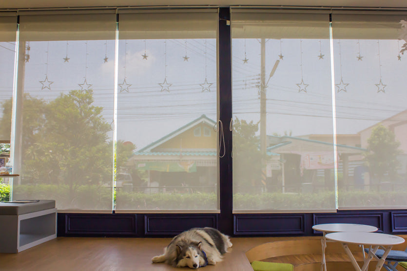 4 of the Best Privacy Blinds for Your Windows