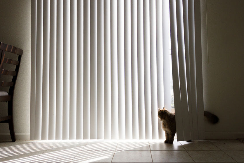 cat in middle of vertical blinds
