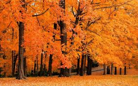 fall color10