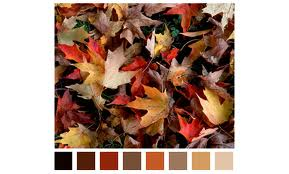 fall color4