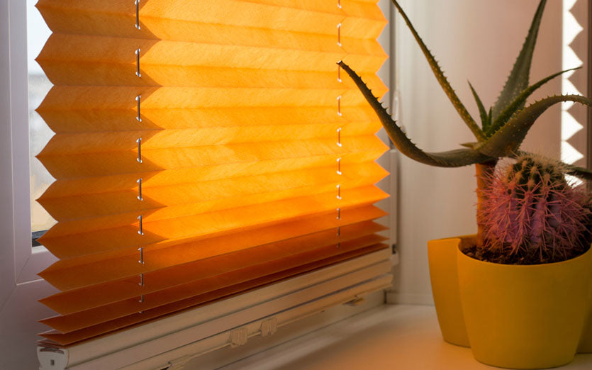 pleated blinds and potted plant