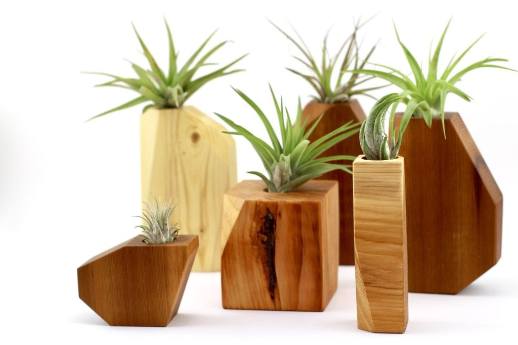 Wood air planter