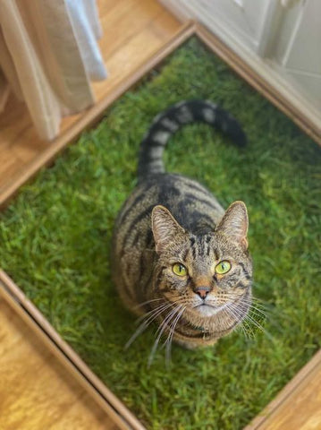 indoor grass for cats