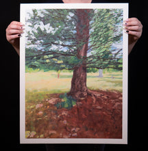 Load image into Gallery viewer, Tree, Dappled Light - Print (20x26 Inches)