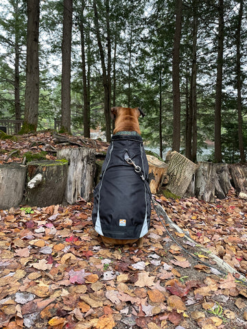 slow living habits - get outside in nature, photo of a dog overlooking a forest