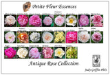 Antique Rose Collection Petite Fleur Essence Kit