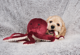 Olympia Octopus Dog Toy