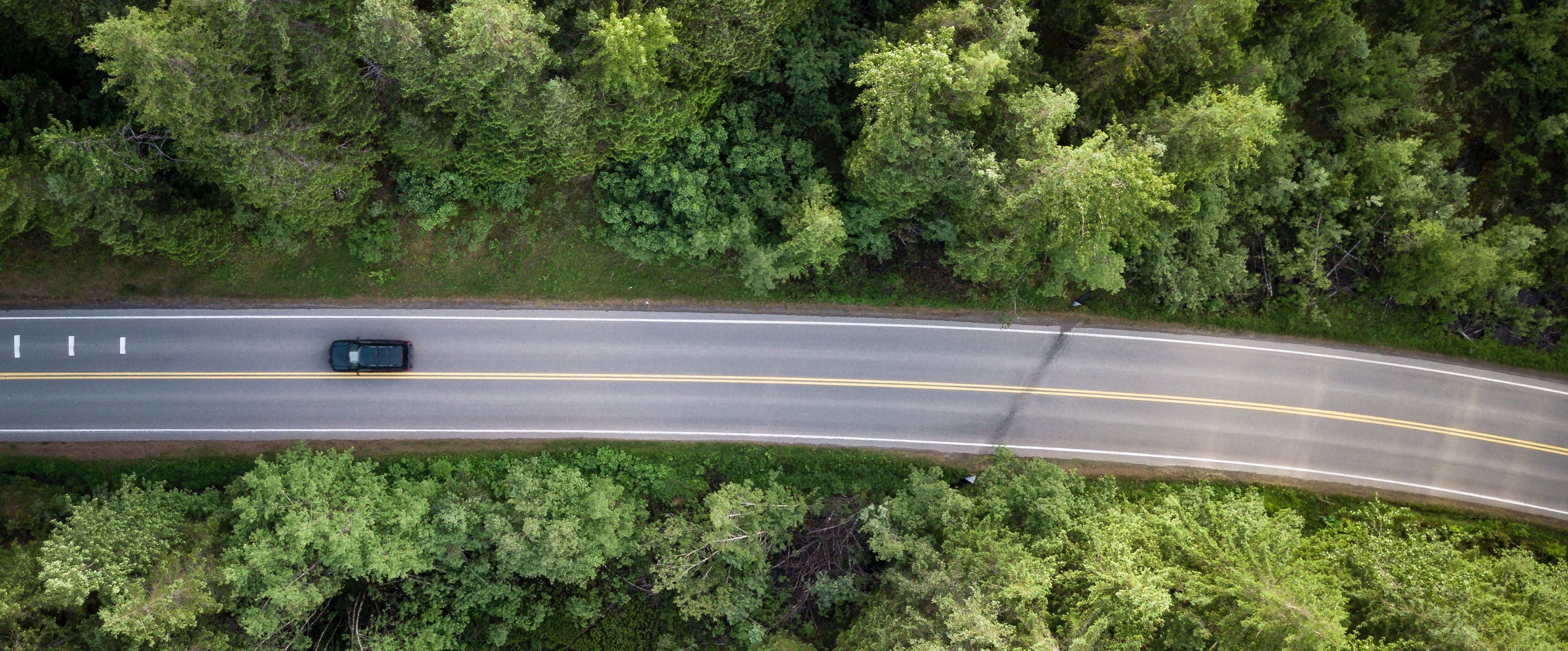 Bird's eye view of road in forest