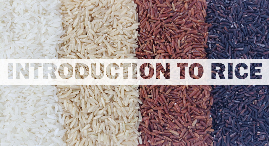 Introduction to Rice