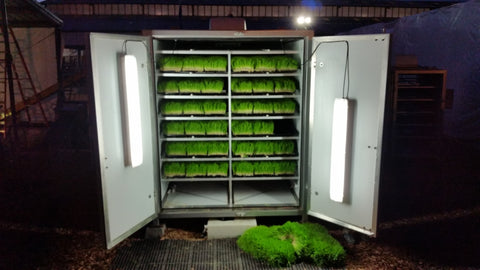 Fodder Works F320 sprouting system