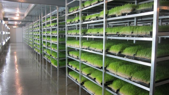 MF1100 Fodder Works Sprouting System