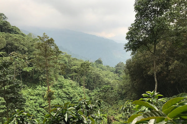 Guatemala Western Highlands