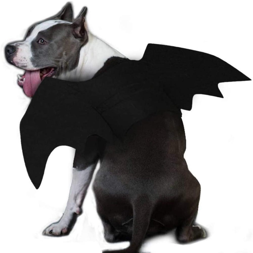 'MY BAT SUIT'