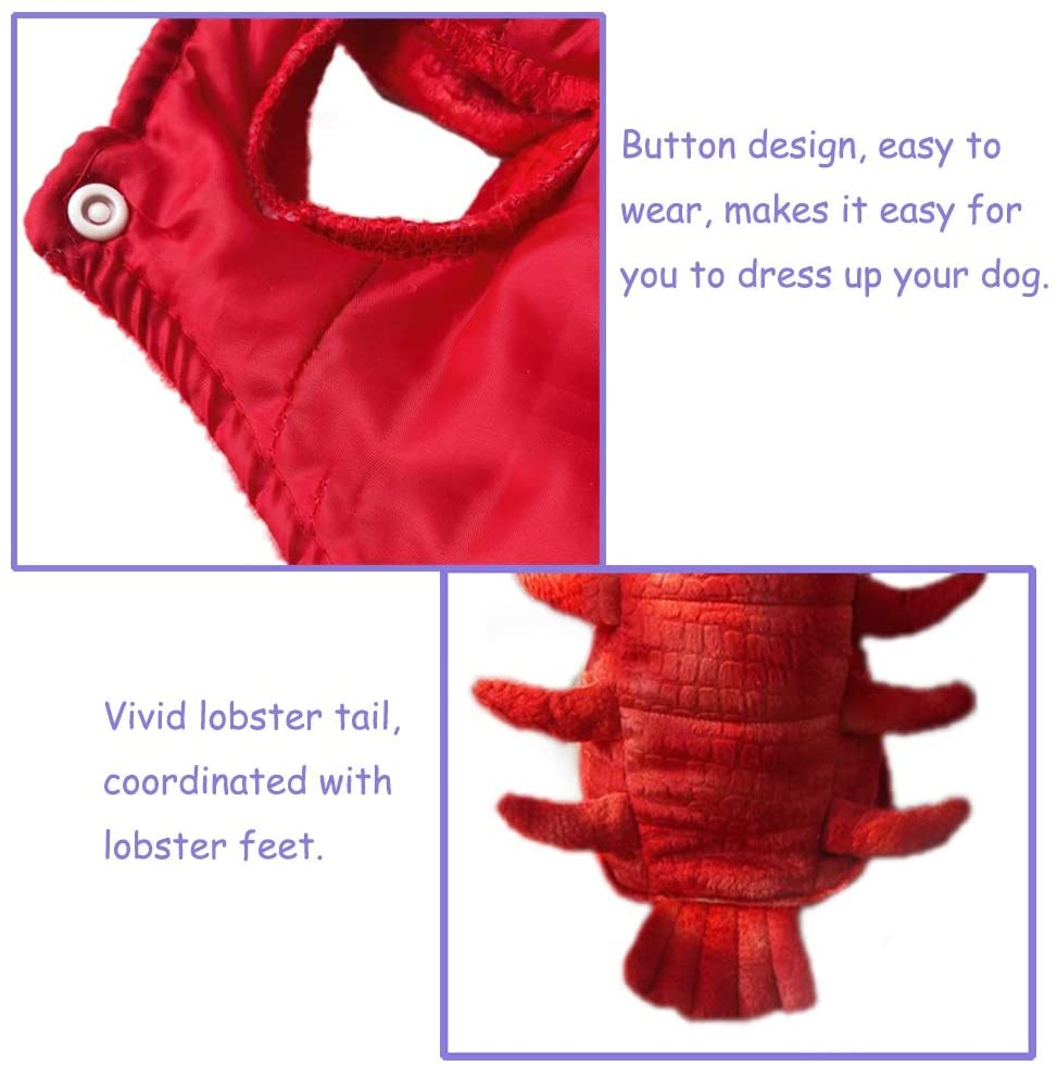 'MY LOBSTER SUIT'