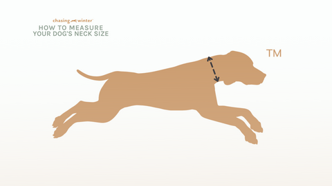 How to measure your dog's neck size for collar