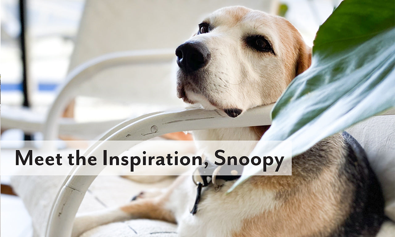about-us-meet-snoopy-the-inspiration-image