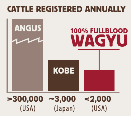 Angus vs. Wagyu Cattle in United States