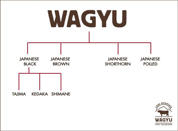 Wagyu Cattle Family Flow Chart