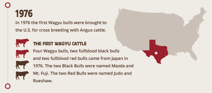 History of Wagyu Cattle in the US