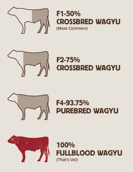 Wagyu Breed Information