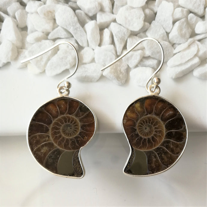 Ammonite and Sterling Silver Earrings