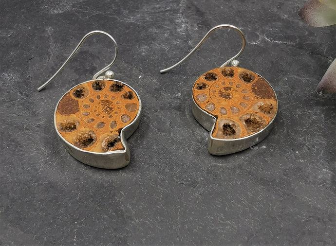 Ammonite and Sterling Silver Earrings  Light