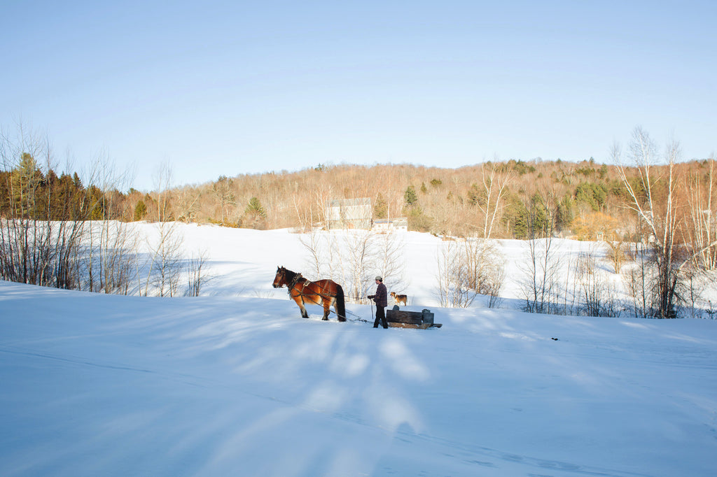 Andrew and his draft horse pull sugaring materials across a snowy field.