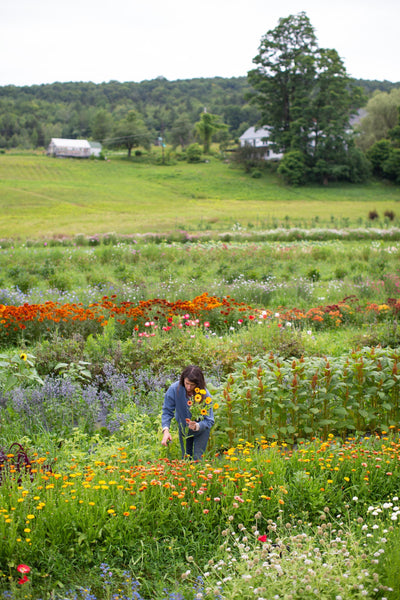 Rita harvests flowers in a field at Stitchdown Farm.