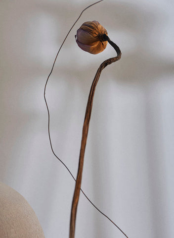 A long stem with a dried flower bud at the top.
