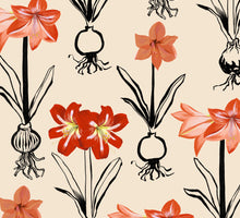 Load image into Gallery viewer, Amaryllis Giftwrap