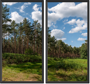 "2 windows vertical ""The Forest of Scots Pines"""