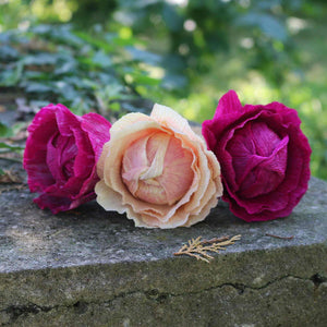 cabbage roses  in paper