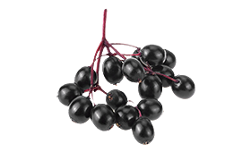 A clump of black elderberries for promoting your immune system