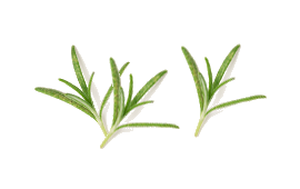 Three tufts of rosemary for soothing soreness