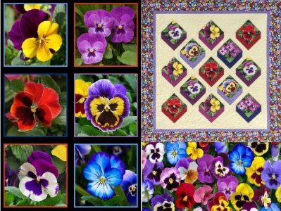 Fancy Pansies Quilt Kit