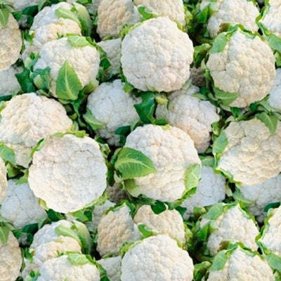Windham - 51899D Cauliflower