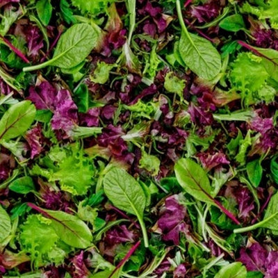Windham - 51904D Mixed Lettuce