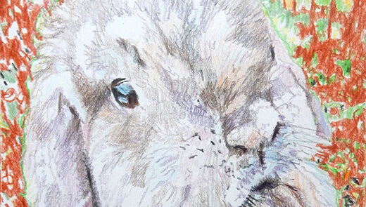Pet portraits: Dexter the lop-eared rabbit
