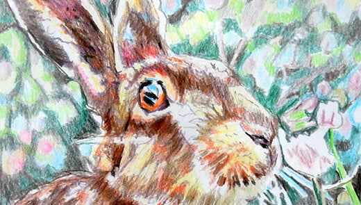 Animal portrait: Harry hare