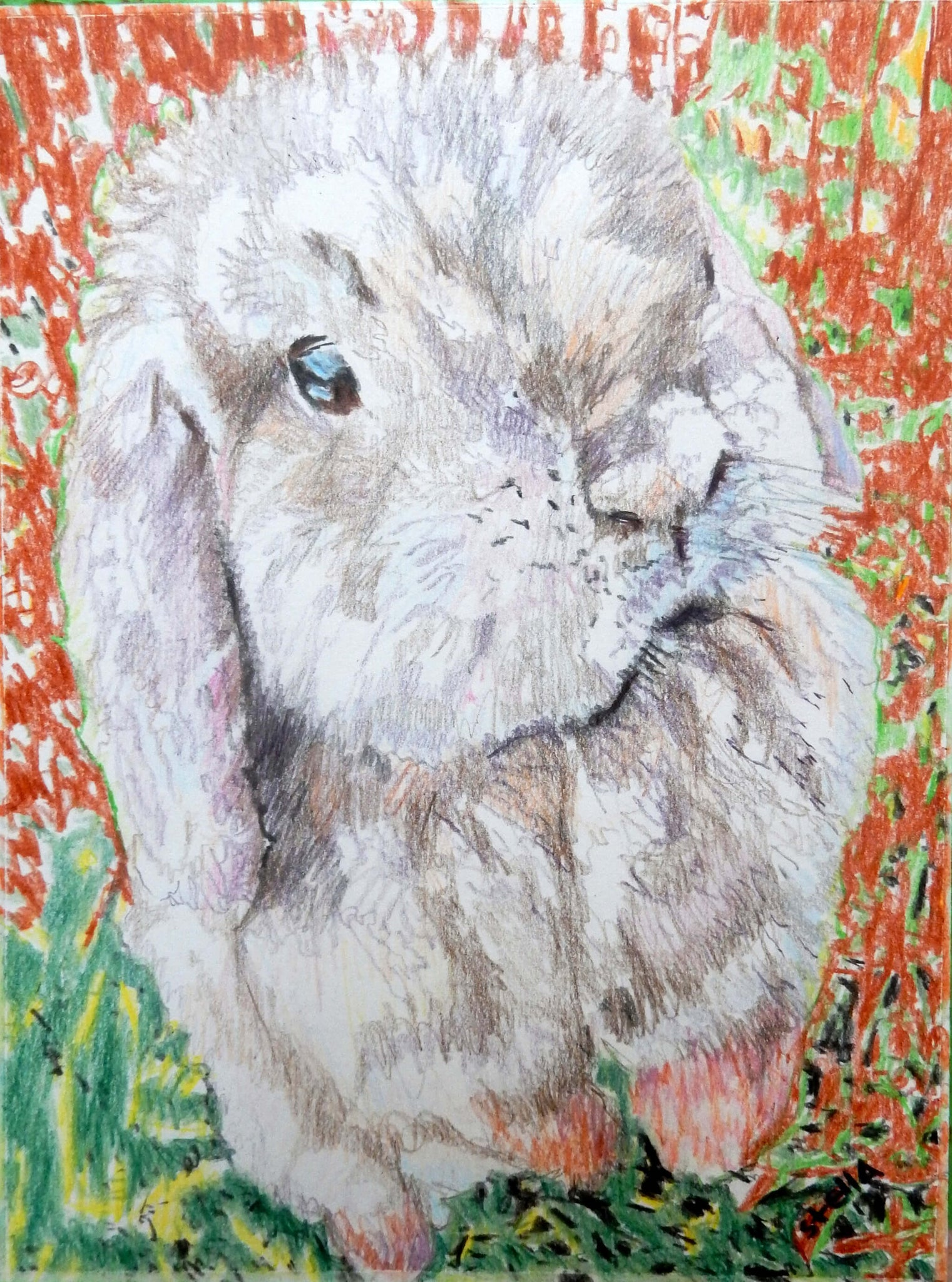 Dexter the lop-eared rabbit pet portrait pencil on paper artwork by Stella Tooth.