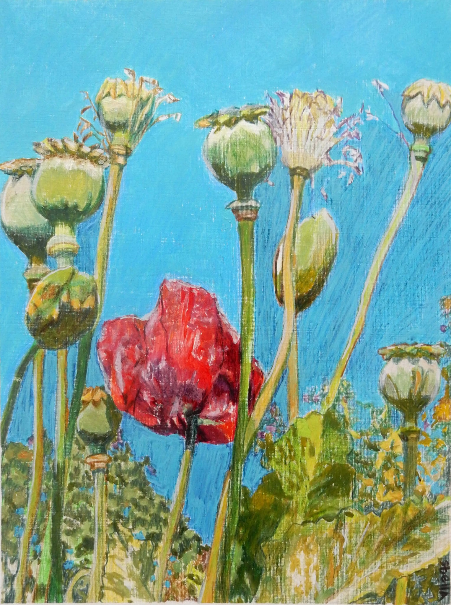 Top of the poppies oil on canvas floral artwork on paper by Stella Tooth