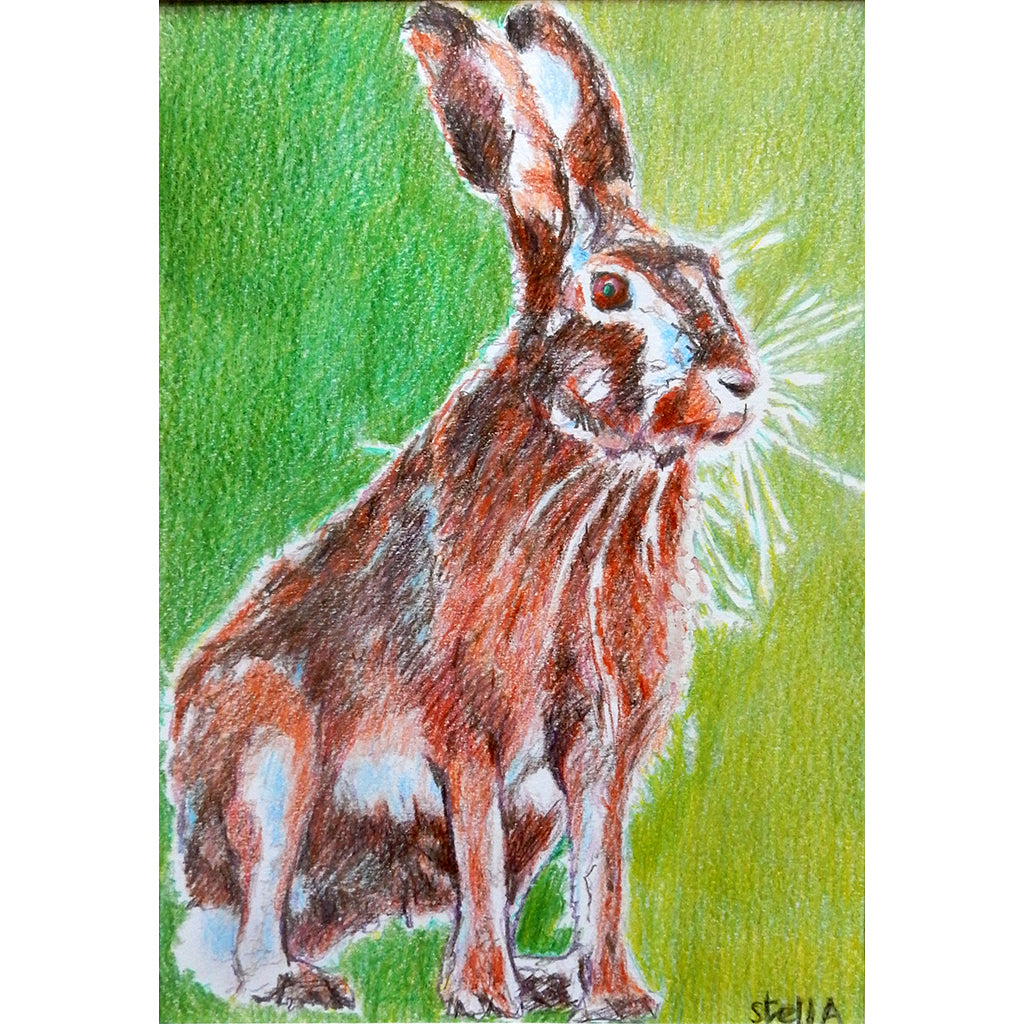 Harold the hare pencil on paper artwork by Stella Tooth